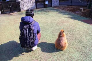 カピバラと日向ぼっこの写真・画像素材[2130413]