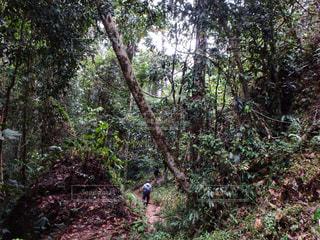 ジャングルの中を進むの写真・画像素材[2212620]