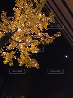 秋,夜,黄色,暗い,葉,樹木,ライトアップ,イチョウ,イエロー,電飾,草木,見上げて
