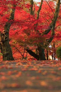 福井県鯖江市の西山公園の写真・画像素材[802440]