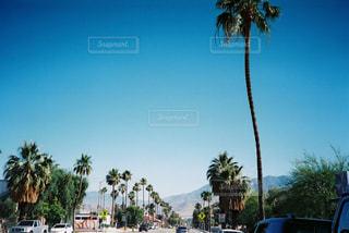 夏,海外,砂浜,アメリカ,旅行,ヤシの木,ロサンゼルス,フィルム,西海岸,パームスプリングス,パームツリー,フィルム写真,フィルムフォト