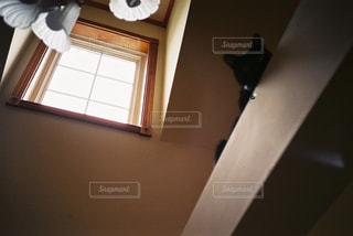 猫,リビング,屋内,モノクロ,室内,電球,日差し,レトロ,電気,リラックス,フィルム,黒猫,キャット,愛猫,フィルム写真,フィルムフォト