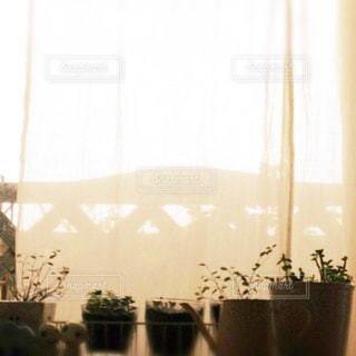 夕暮れの窓辺の写真・画像素材[1810138]