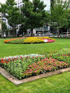 札幌大通り公園の花壇の写真・画像素材[1884985]