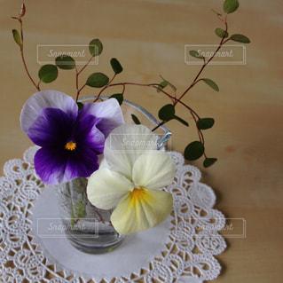 紫と黄色のビオラの写真・画像素材[1885117]
