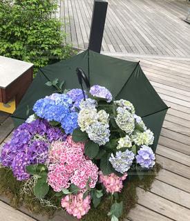 紫陽花と傘の写真・画像素材[2182420]