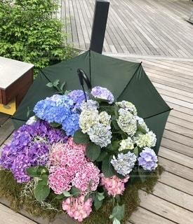 傘に咲いた紫陽花の写真・画像素材[3377703]