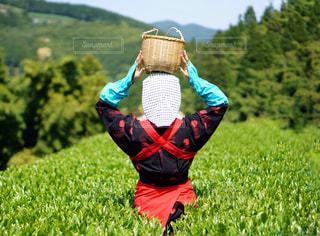 女性,風景,空,屋外,緑,後ろ姿,葉っぱ,草,樹木,人物,背中,新緑,人,後姿,お茶,茶摘み,茶畑,草木,フォトジェニック,インスタ映え,茶娘