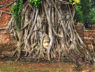 海外,旅行,タイ,寺院,大仏,寺