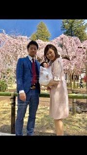 お宮参り、満開の桜と春日和の写真・画像素材[3011107]
