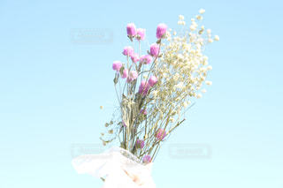 植物にピンクの花の写真・画像素材[1915522]