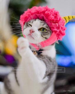 猫,動物,屋内,かわいい,鬼,節分