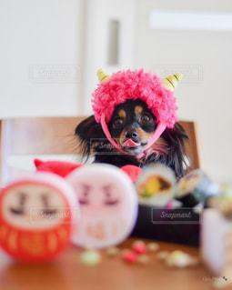 犬,動物,屋内,かわいい,鬼,節分,恵方巻き