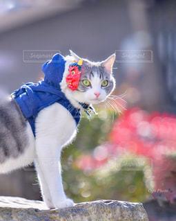 猫,かわいい,鬼,節分