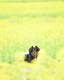 草の上に座って犬対象フィールドの写真・画像素材[1824674]
