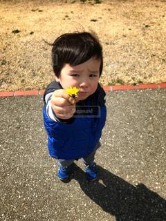 子ども,花,春,屋外,黄色,プレゼント,人物,人,赤ちゃん,たんぽぽ,幼児,少年,2歳