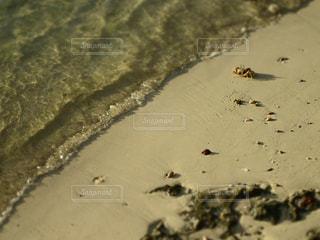 海,海外,砂,砂浜,波,茶色,足跡,旅行,カニ,ニューカレドニア,ベージュ,メトル島