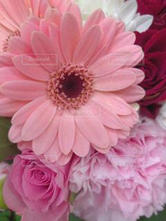 ピンクの花で一杯の花瓶の写真・画像素材[1796057]