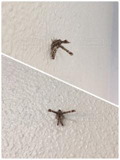 初めて見る虫の写真・画像素材[1811994]