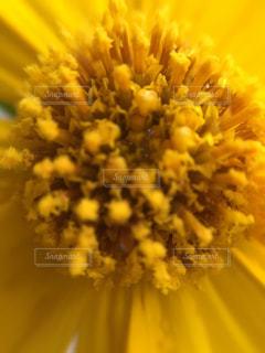 花のクローズアップの写真・画像素材[2119878]
