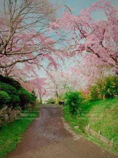 花見旅行の写真・画像素材[1790798]