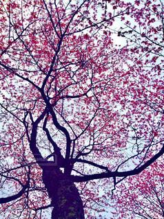近くの木のアップの写真・画像素材[1868706]