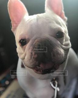 ドライブが嬉しい犬の写真・画像素材[2362333]