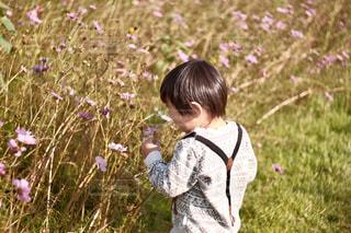 コスモス,子供,レトロ,写真,フィルム,男の子,雰囲気,クラシック,フィルム写真,フィルムフォト