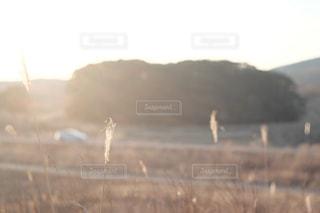 秋が来る。の写真・画像素材[2444972]