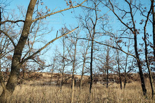 樹木の写真・画像素材[2445016]