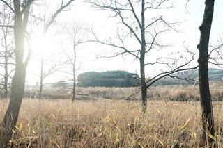 森,林,光,レトロ,落ち葉,写真,フィルム,雰囲気,クラシック,フィルム写真,空気感,フィルムフォト
