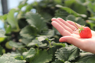 近くの植物のアップの写真・画像素材[1794543]