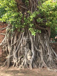 フォレスト内のツリーの写真・画像素材[1814554]