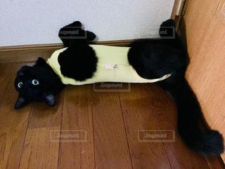 猫,黄色,黒猫,ごろ寝,エリザベスウェア