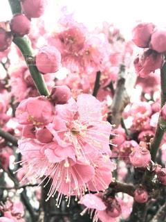 花,花見,雨上がり