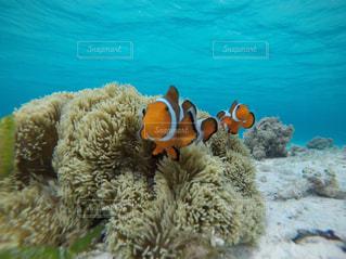 水中のサンゴの写真・画像素材[2355587]