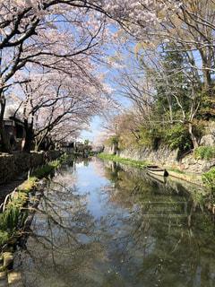 桜と小舟の写真・画像素材[2037066]
