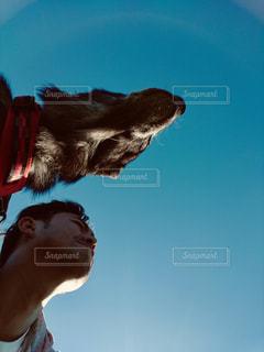 犬,空,屋外,散歩,男,柴犬