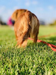 草の生えた野原にいる犬の写真・画像素材[2131827]