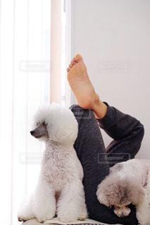 おじさんと犬フォト♫の写真・画像素材[2011474]