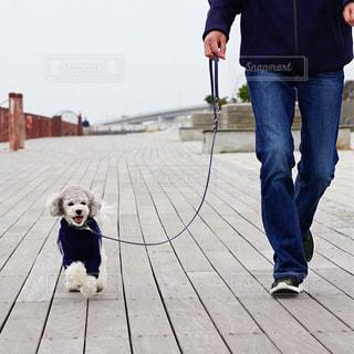 お散歩の写真・画像素材[2028558]