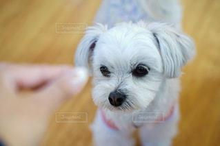 ミックス犬の写真・画像素材[2030184]