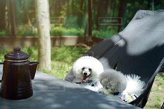 犬とバーベキューへの写真・画像素材[2090145]