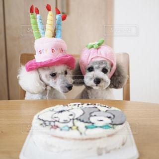 バースデーケーキの前に座る犬の写真・画像素材[2175660]