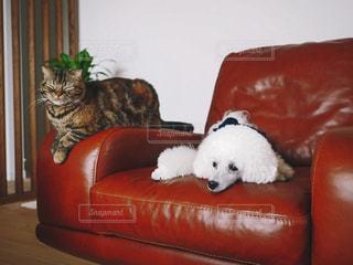 犬と猫の写真・画像素材[2184357]