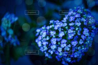 花のクローズアップの写真・画像素材[2264793]