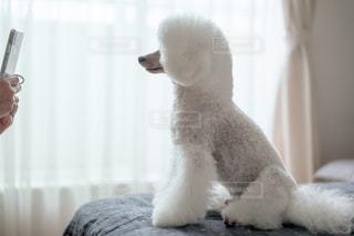 モデルをする犬の写真・画像素材[2300552]