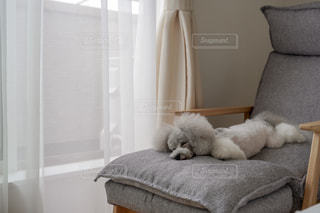 お昼寝しているトイプードルの写真・画像素材[2478358]