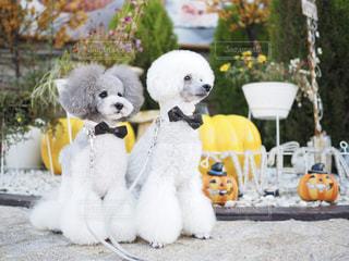 かぼちゃの前でポーズ。の写真・画像素材[2499103]
