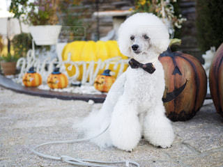 ベンチに座っている犬の写真・画像素材[2499118]